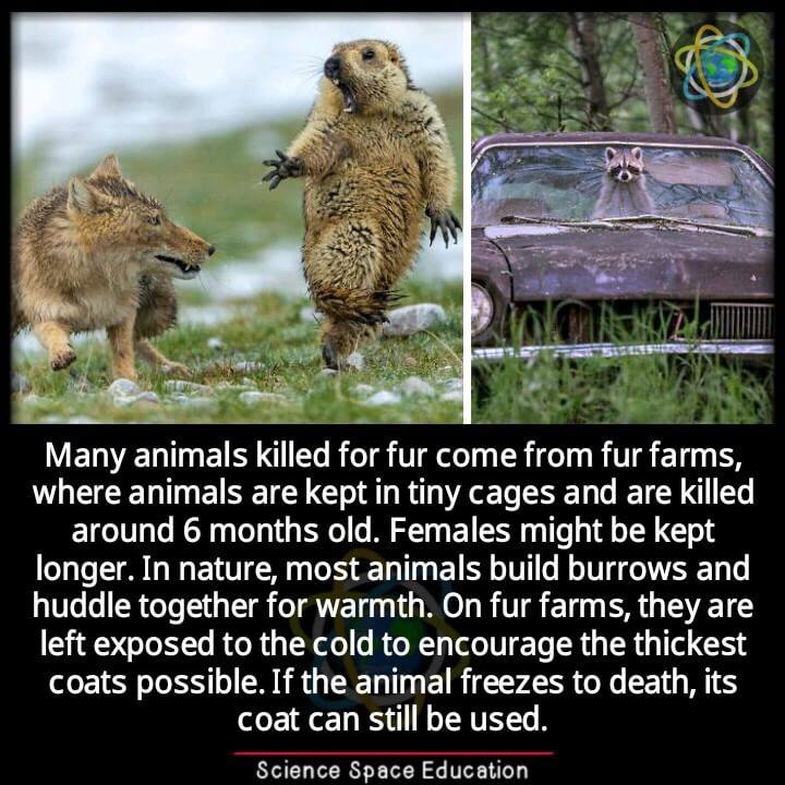 save fur animal