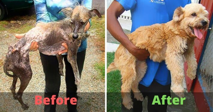 INCREDIBLE transformations of dogs BEFORE and AFTER the shelter! 1