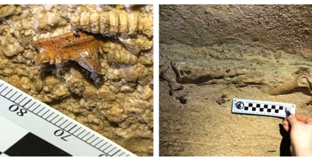 Huge 300 Million Year Old Shark Skull Discovered Inside an Underground Kentucky Cave